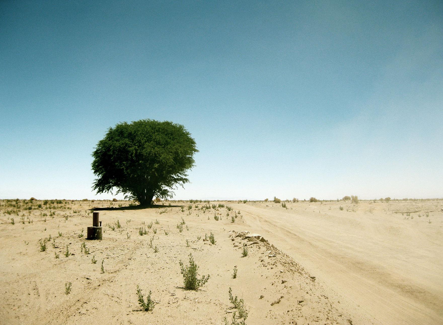 Grønt tre i ørkenen